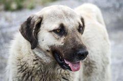 Собаки, собаки, собаки, портрет выслеживают изображения, собак в различных породах, лежа собак, играющ собак, изображения собак с Стоковая Фотография RF