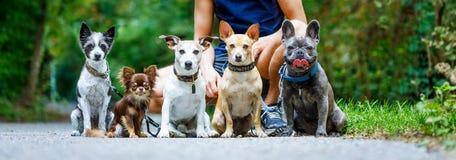 Собаки с поводком и предпринимателем готовыми для того чтобы пойти для прогулки стоковая фотография rf