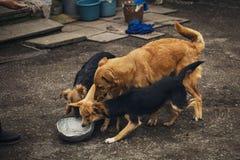 Собаки улицы около шара еды Холодные собаки Стоковое Фото