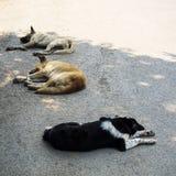 3 собаки улицы спать в тени Стоковая Фотография