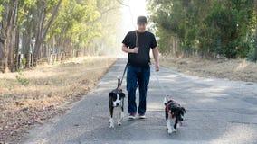 Собаки человека идя на проселочной дороге Стоковое Изображение
