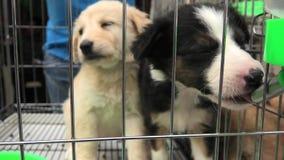 Собаки щенка в выпивать клетки видеоматериал