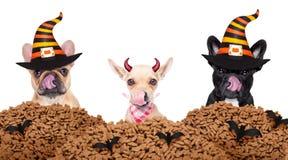 Собаки дьявола хеллоуина голодные для еды Стоковое Изображение