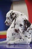 собаки Стоковые Фото