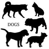 собаки 1 Стоковые Изображения RF
