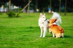 собаки 2 Стоковое Изображение