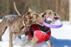 2 собаки Стоковое Изображение