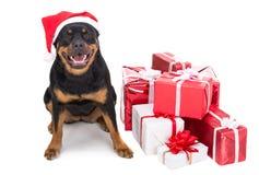Собаки Стоковая Фотография