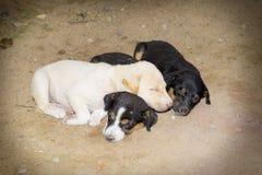 Собаки Стоковое фото RF