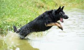 Собаки 08-2017 Стоковое фото RF
