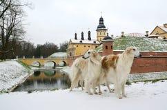 2 собаки borzoi в парке зимы Стоковое Фото