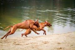 Собаки Outdoors Стоковое Фото