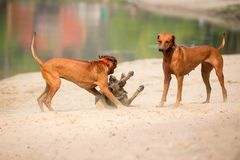 Собаки Outdoors Стоковые Фото