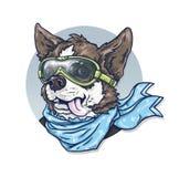 Собак-пилот в стеклах и шарфе Чихуахуа Чертеж анимации забавной собаки Стоковое фото RF
