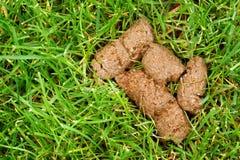 Собачье дерьмо Стоковое Изображение RF