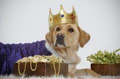 собачье монетное золото Стоковые Изображения