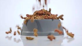 Собачья еда вращает на белизне сток-видео