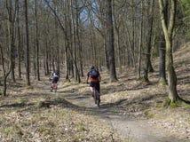 Соберите велосипедистов ехать велосипед на предыдущей дороге леса весны в sunl стоковая фотография