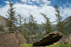 Соберите лиственницы среди утесов в горах стоковые фото