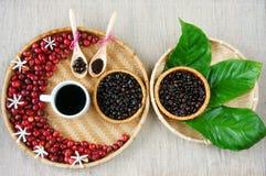 Соберите кафа, фасоли, чашки кофе, лист, цветка Стоковое Изображение