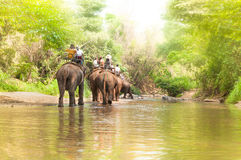 Соберите туристов для того чтобы ехать на слоне в лесе Чиангмае Стоковые Фотографии RF
