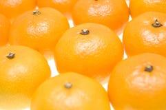 соберите tangerines Стоковое фото RF