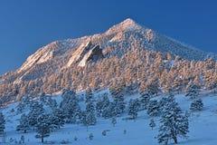 Собираннсяый снег медведя пиковый Стоковое Изображение