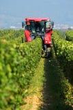 собирать виноградины стоковое фото