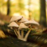 Собирать грибы Стоковое Фото