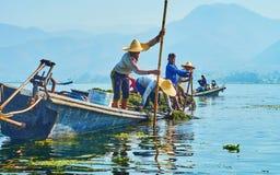 Собирать засорителей, озеро Inle, Мьянма Стоковая Фотография RF