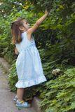 собирать листья малыша Стоковая Фотография