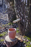 Собирать сок дерева березы в весеннем времени Стоковое Изображение RF
