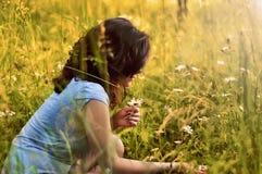 собирать траву маргариток Стоковые Фото
