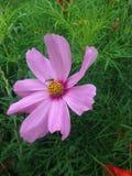 собирать цветень стоковое изображение rf