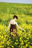 собирать цветков стоковые изображения