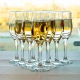 собирать шампанского Стоковая Фотография RF