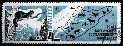 Соболь (zibellina) Martes, карта запаса &Nature Lake Baikal, пятидесятой годовщины заповедника Barguzin, serie, около 1966 стоковое изображение