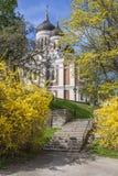 собор Александра nevsky Стоковые Изображения