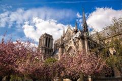 Собор Нотр-Дам с деревьями весны в Париже, Франции Стоковое Изображение