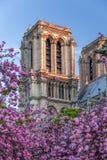 Собор Нотр-Дам с деревьями весны в Париже, Франции Стоковая Фотография RF