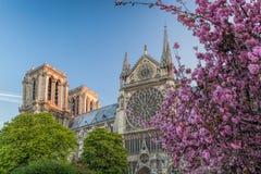 Собор Нотр-Дам с деревьями весны в Париже, Франции Стоковые Изображения RF