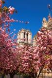 Собор Нотр-Дам с деревьями весны в Париже, Франции Стоковая Фотография
