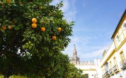 Собор Севильи от внешней стороны перспективы Стоковые Фото