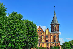 Собор Koenigsberg - готический XIV век виска. Калининград Стоковые Изображения RF