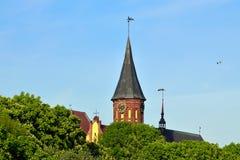 Собор Koenigsberg на острове Kneiphof Калининград, Россия Стоковое Изображение