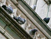 Собор St Patrick's Стоковое фото RF
