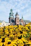 Собор Wawel & x28; Poland& x29; стоковое изображение