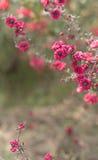 Соболезнования и предпосылка сочувствию с розовыми цветками Стоковые Изображения RF