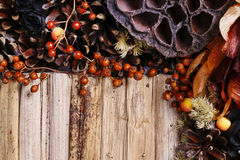 Соболезнования предпосылка, искусственные цветки и заводы осени Стоковые Фото