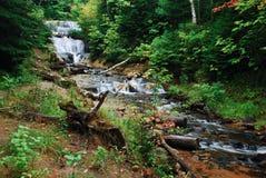 Соболь падает в самые милые цвета осени, Мичиган стоковые изображения rf